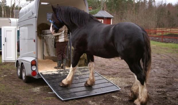 Транспорт для перевозки лошади