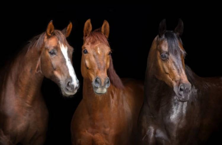 Портал о лошади