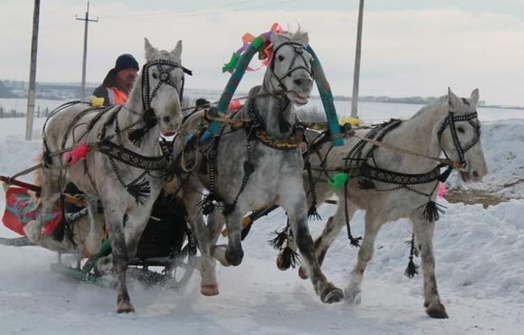 Тройки лошадей