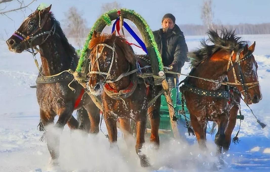 Тройка рыжих лошадей