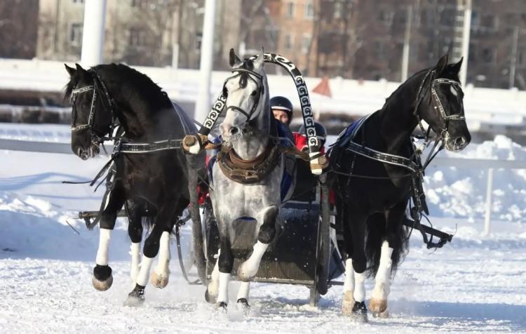 Тройка лошадей в упряжке