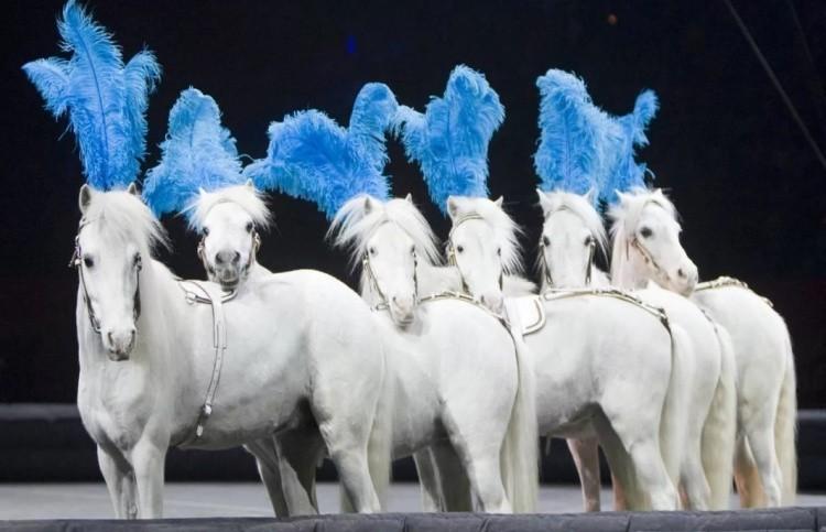 Цирковые лошади