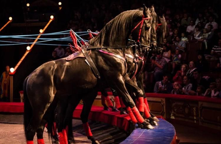Цирковые лошади фото