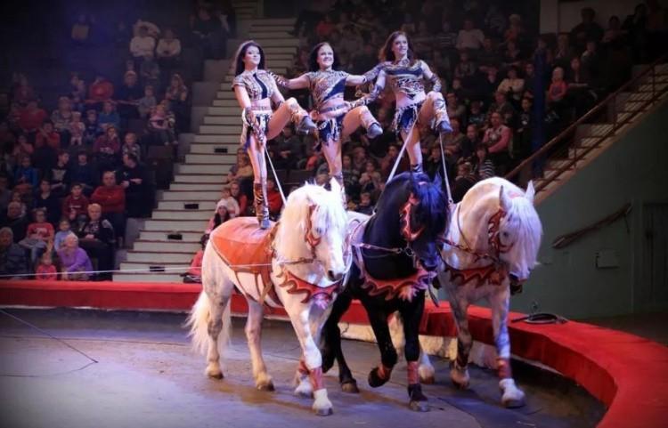 Конный цирк