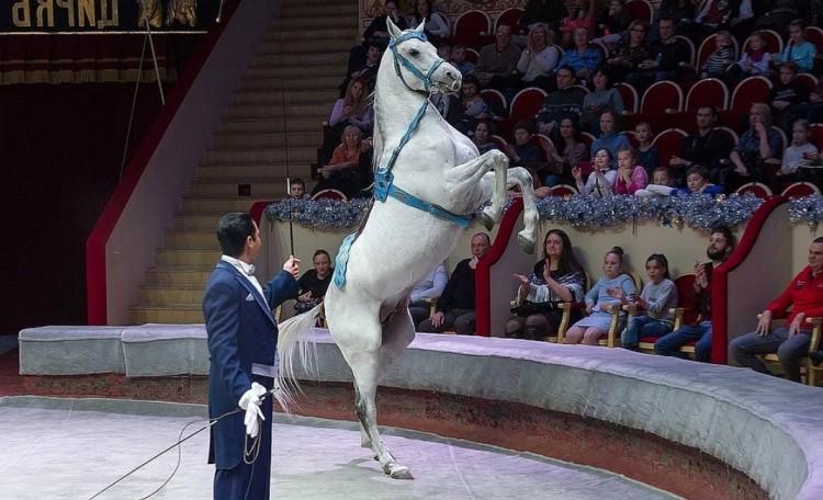 Цирк с лошадьми