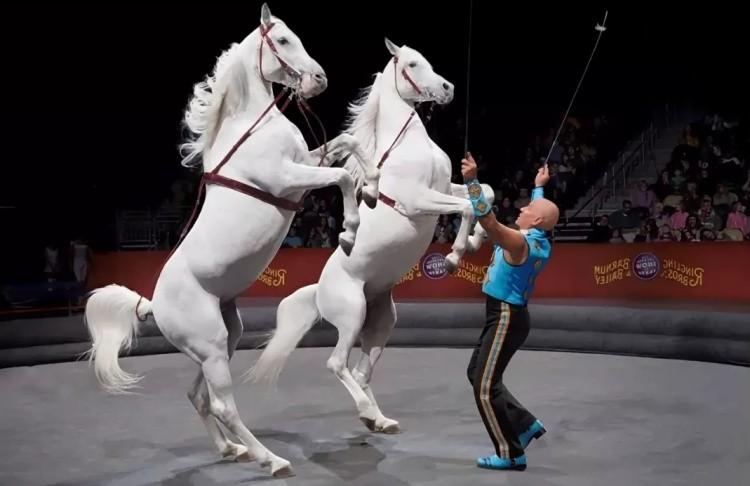 Цирк кони