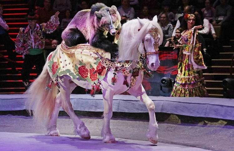 Лошадь на арене цирка
