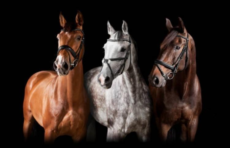 Спорт и лошади
