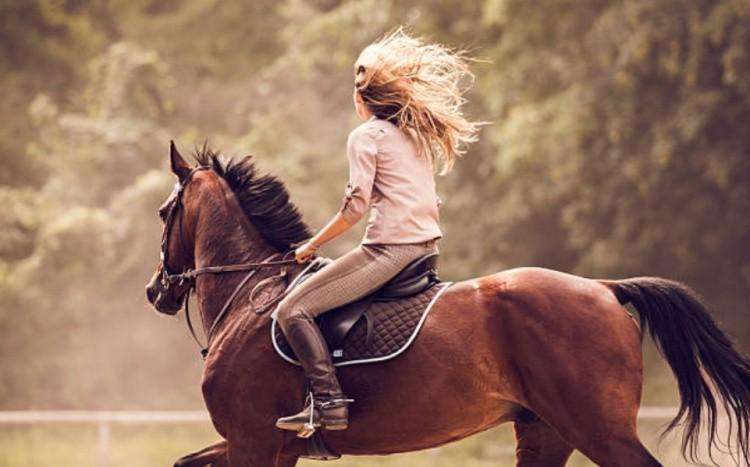 Воспитание спортивных лошадей
