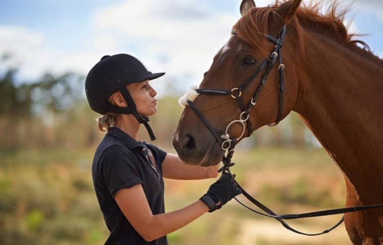 Обучение спортивной лошади