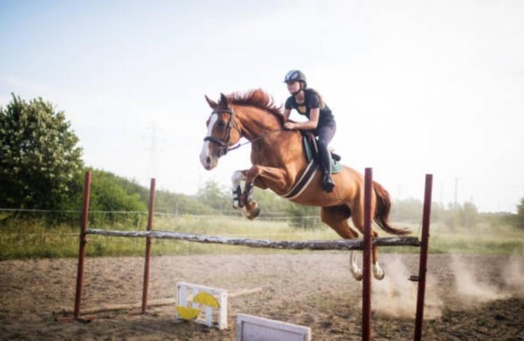 Спортивная лошадь барьер