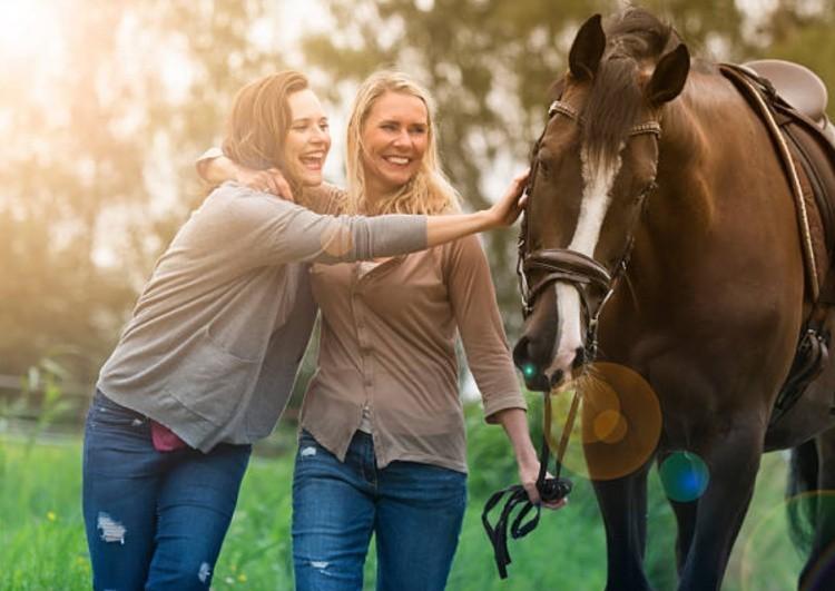 Спортивная лошадь фото