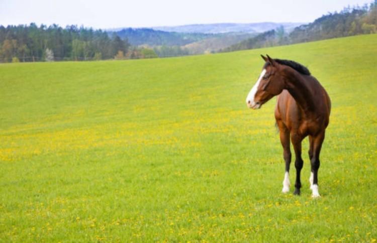 Лошадь разведение