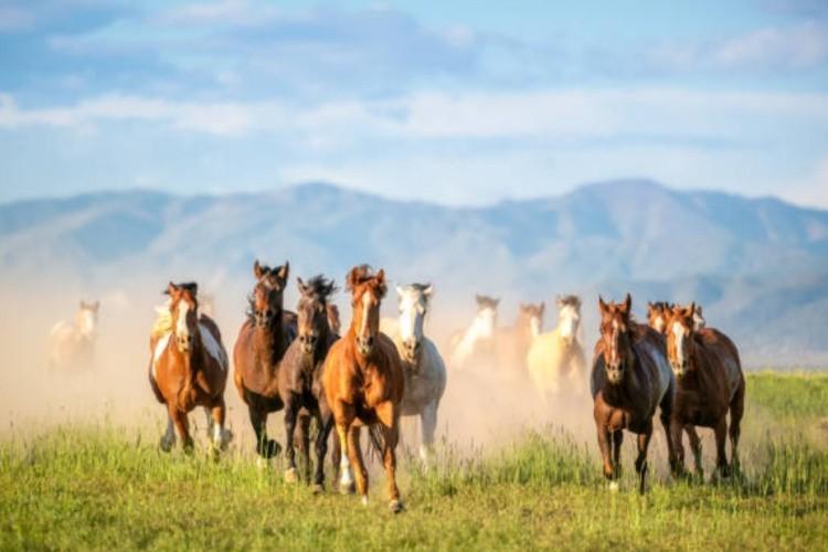 Как выводят породы лошадей
