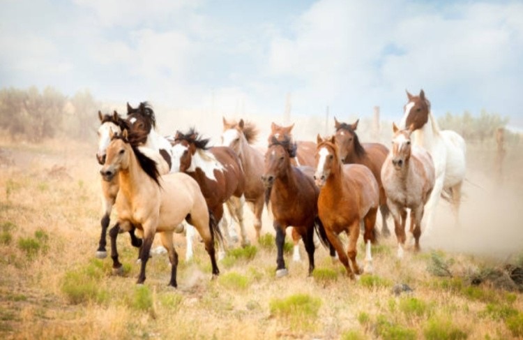 Табун лошади