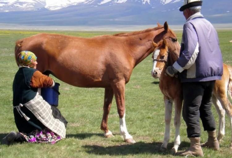 Доение лошади