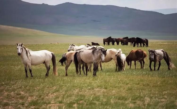 Лошади на поле