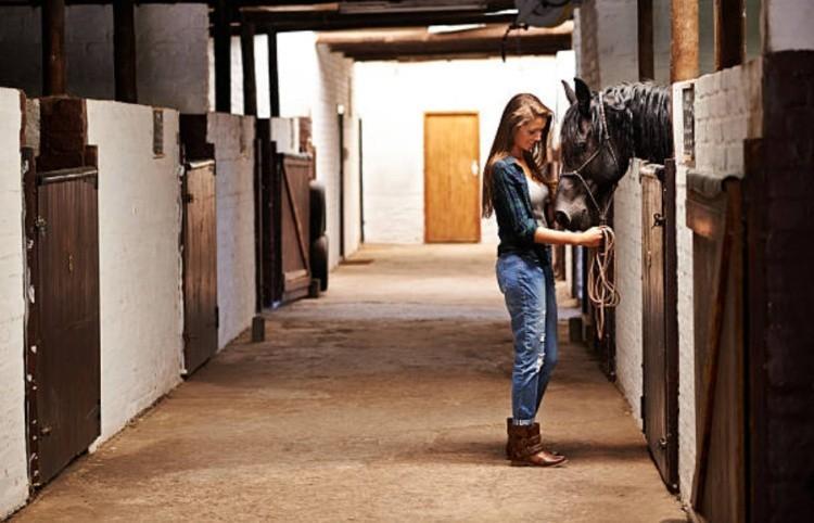 как работать с молодыми лошадьми