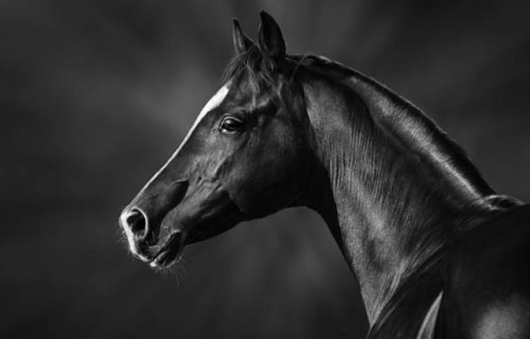 Оформление купли-продажи лошадей