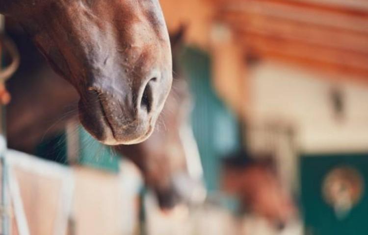 Как покупать лошадь