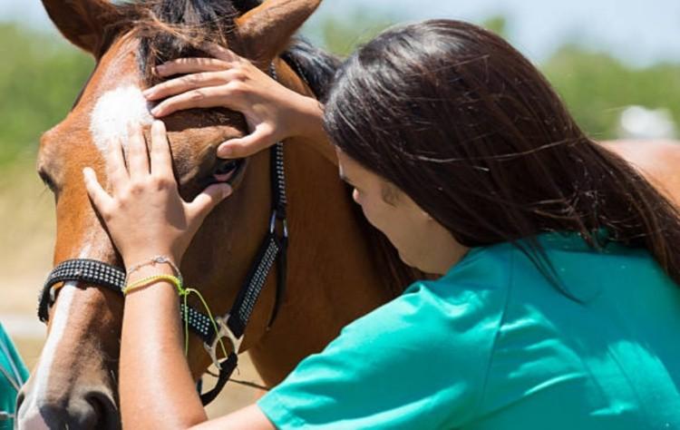 Осмотр лошади