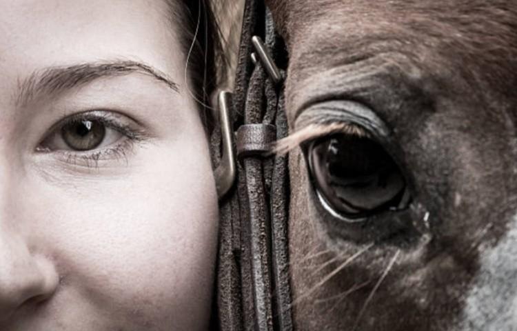 Как лошади воспринимают наш мир