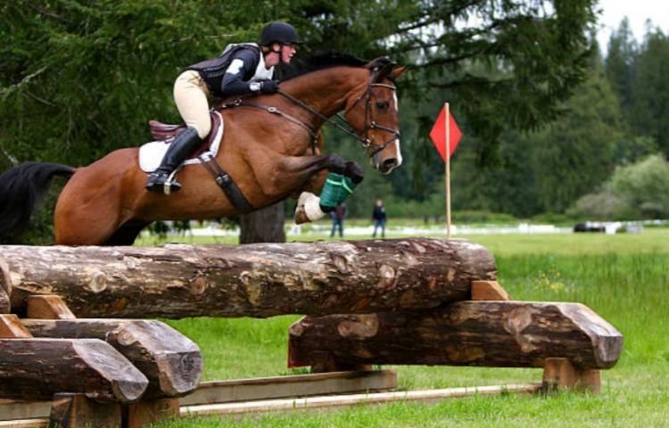 Преодоление лошади препятствий