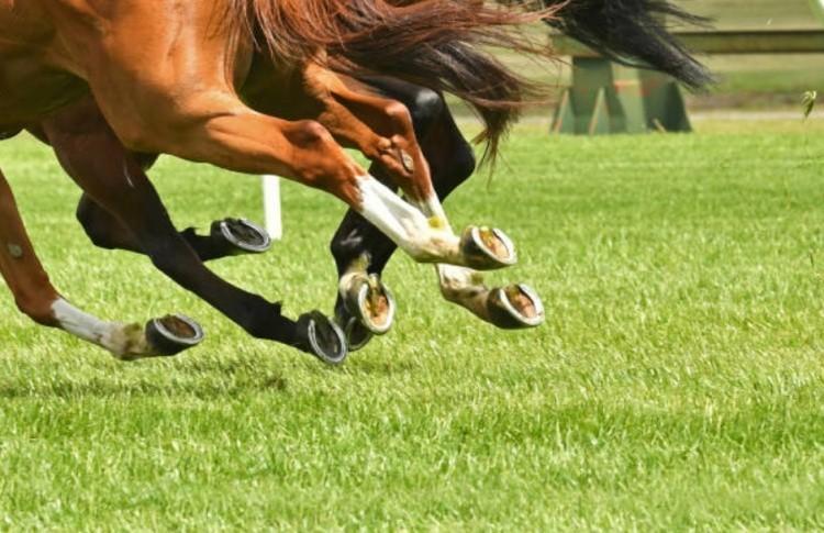 Конные забеги