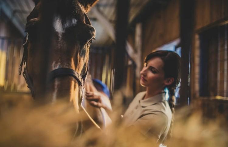 подходить к лошади