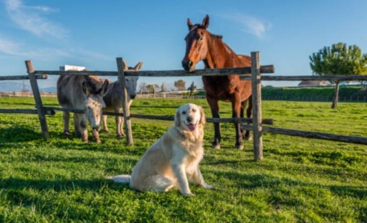 Пет-терапия животные