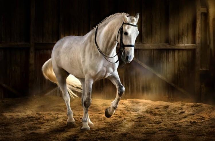 Необычные качества лошадей