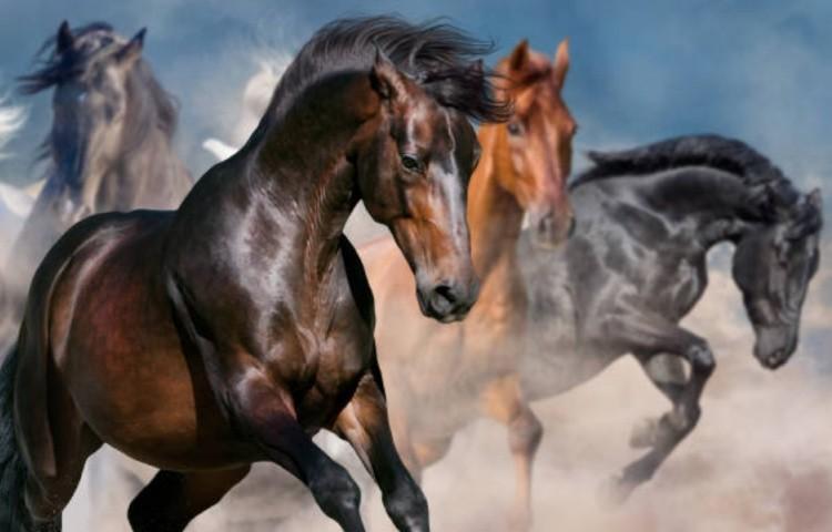 Качества лошадей