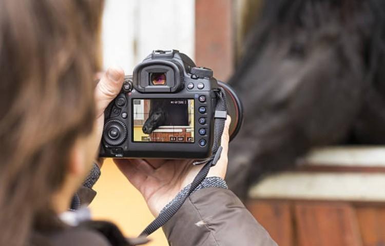 Как лучше фотографировать лошадь