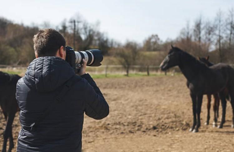 Фотографировать лошадь