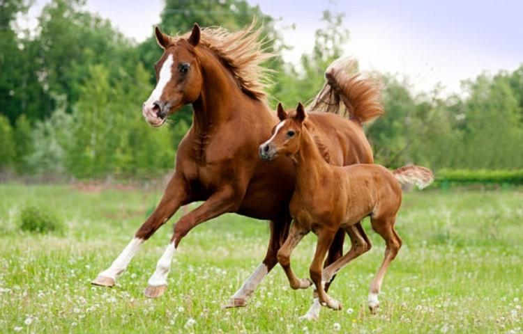 Как разводили лошадей: исторические факты
