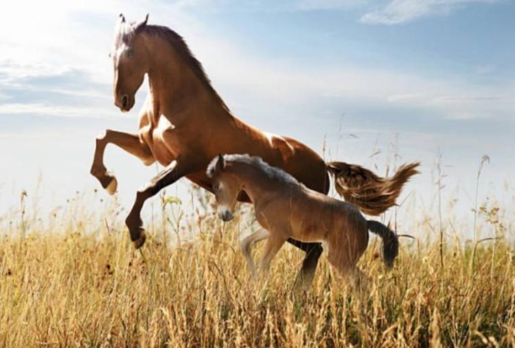 Как разводили лошадей