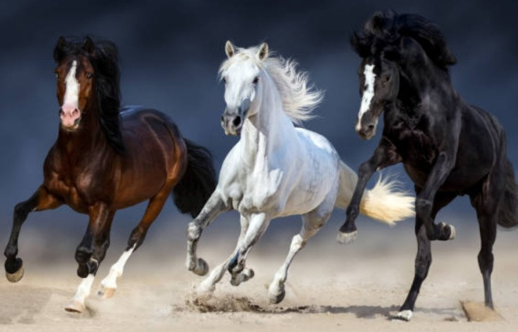 Могз лошадей