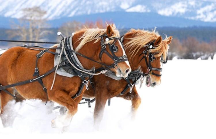 Рабочая лошадь