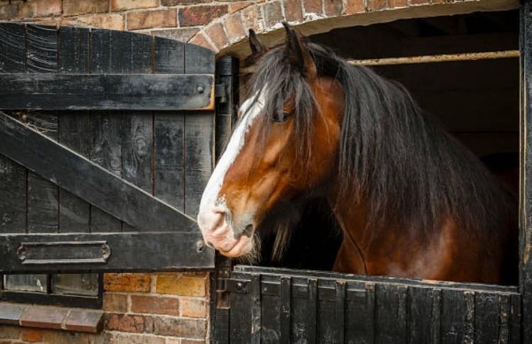 Рабочая лошадь в конюшне
