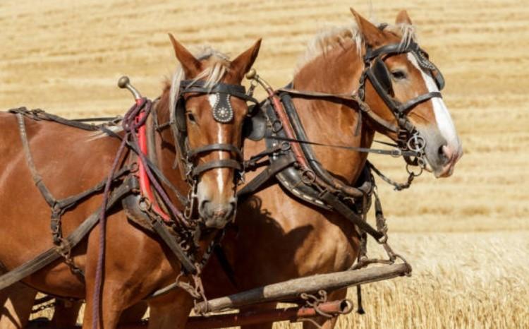 Лошади в работе