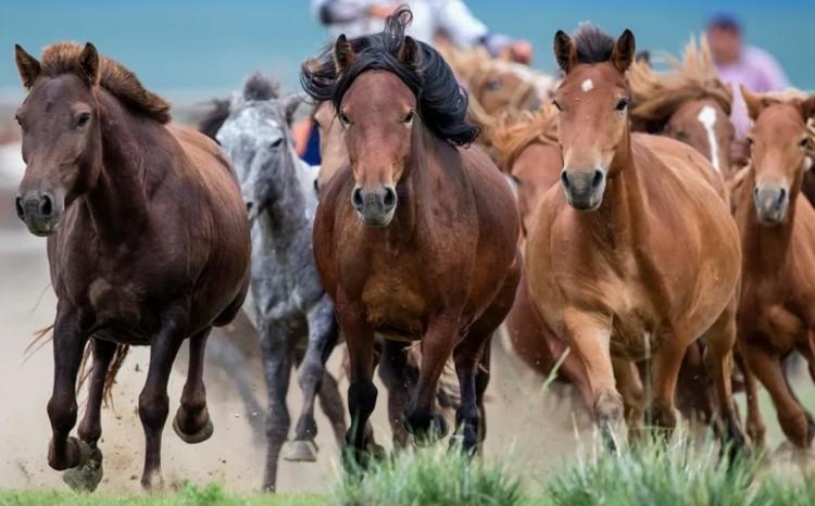 Лошади степных пород
