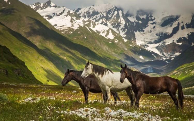 Горские породы лошадей