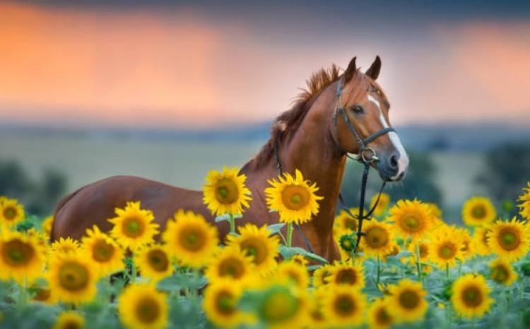 Классификация лошадей