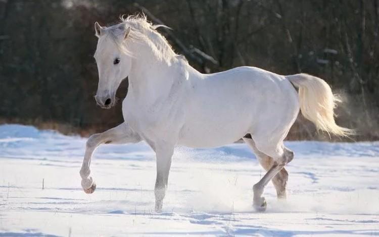 Лошадь терской породы