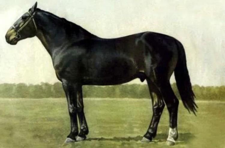 Кузнецкая порода лошадей фото