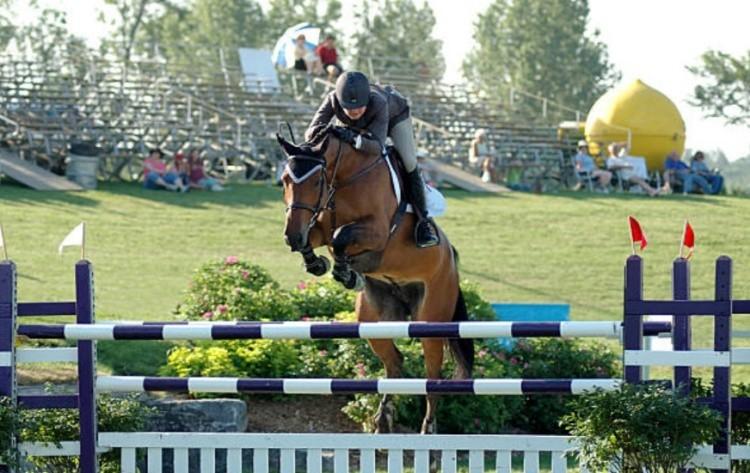 Виды конного спорта