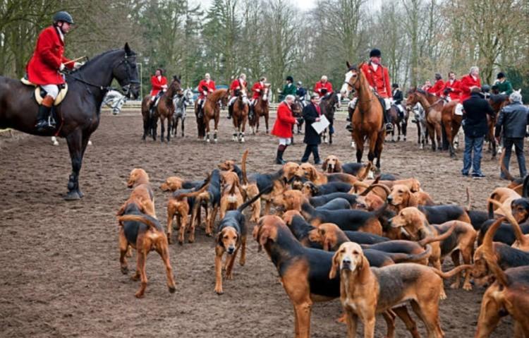 Охота на лошадях