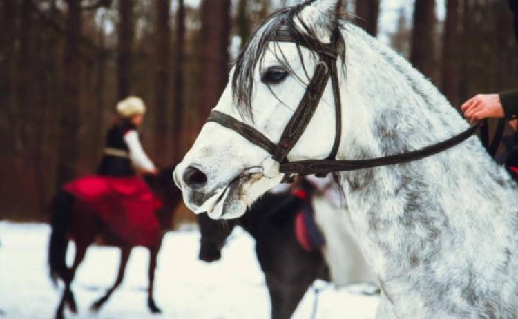Лошадь охота