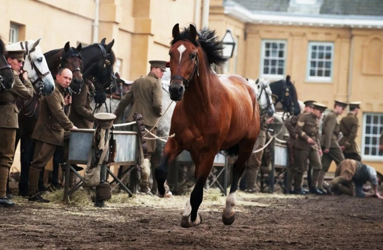 Знаменитые лошади в кино