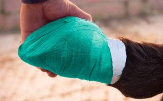 помощь при заболевании лошади